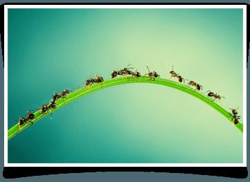 Insect Control Buffalo, NY