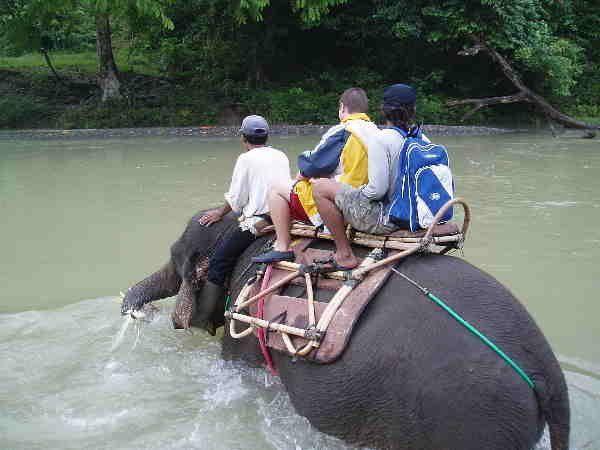 Sumatra Reise Tangkahan Elefant