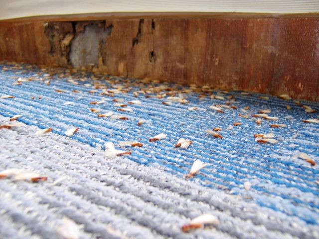 pest and rodent control results in Lincoln, NE