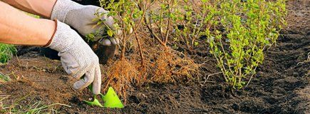 Planting with a green trowel