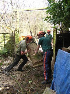 Men moving a tree stump