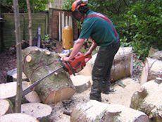 Tree surgeon working amongst felled trunks