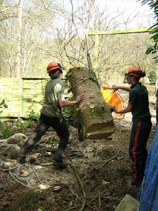 Men moving a tree stump on a hoist