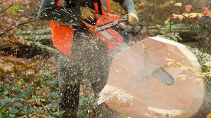 Stump grinding in progress