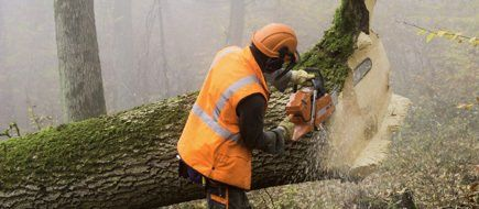 A tree surgeon at work in orange high-vis clothing, in a foggy forest