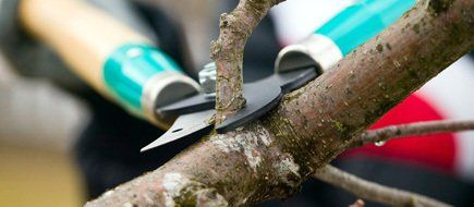 A tree branch being pruned