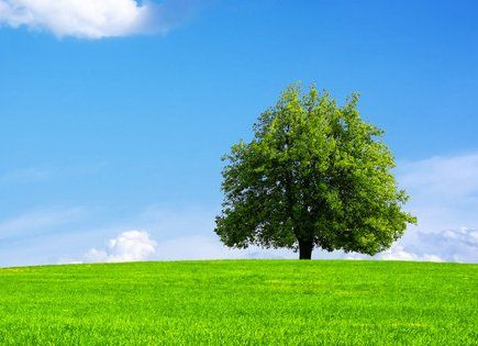 A tree against a blue sky at the top of a green hill