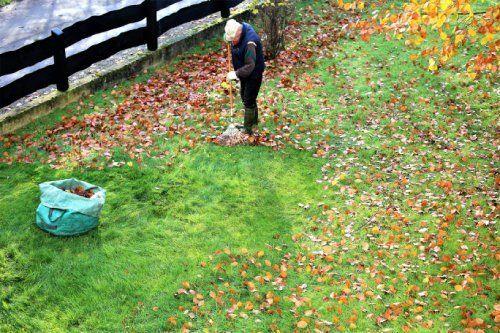 rimozione foglie secche dal prato