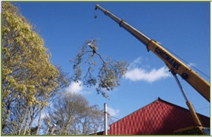Crane taking down a tree