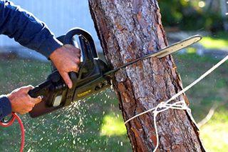 Tree Removal San Antonio, TX