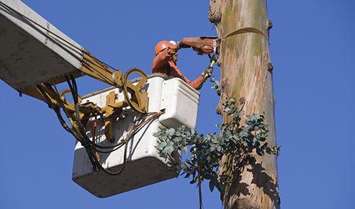 Professional removing a tree in Centralia, MO