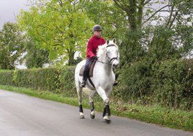 Horse riding school - Comrie, Dunfermline - Tapitlaw Riding School - Horse riding lessons
