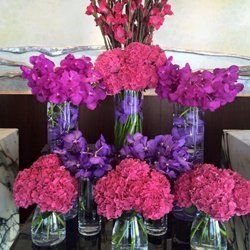violet and pink flowers
