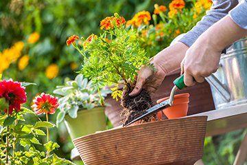 Experienced gardeners