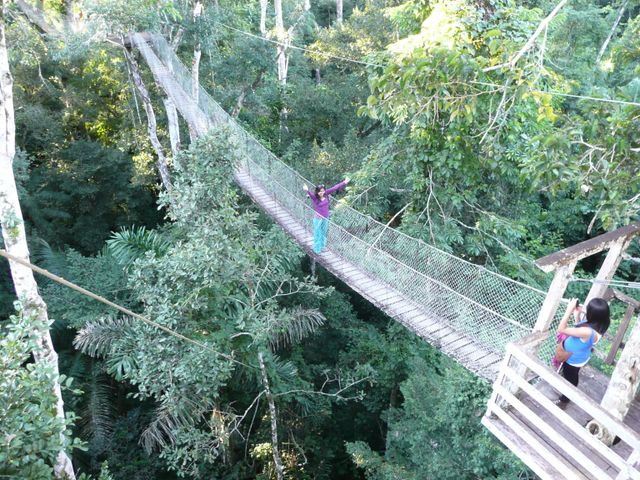 Canopy Walk & COMFORTABLE AMAZON RAIN FOREST TRIP - Haceinda Concepcion Lodge: 3 ...