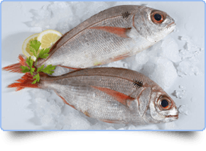 Fresh fish freshly caught today.