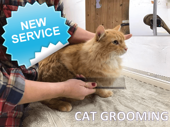 cat grooming cat bath and groom