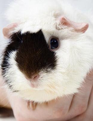 cura conigli brescia