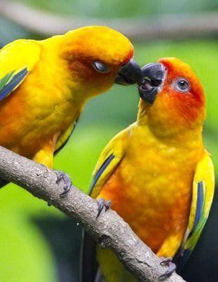 cura uccelli brescia