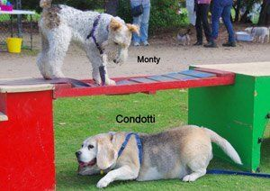 Boroondara Dog Training Kew