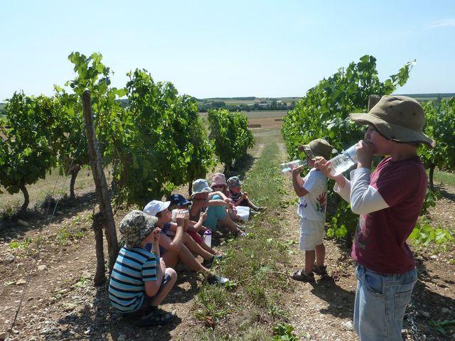 Vineyard walk  la grange du moulin child friendly gites