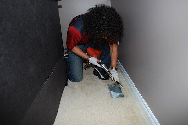 Brisas employee cleaning carpet