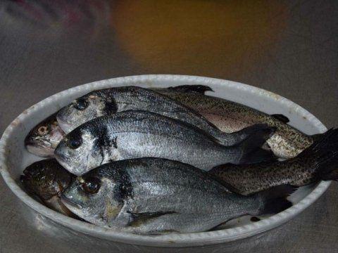 teglia con pesci crudi