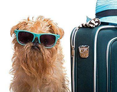 Best Dog Boarding Bothell