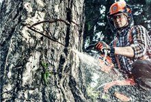 A man with a chainsaw cutting a tree