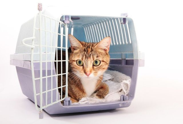 A cat lying on a towel peeping out of a cat carrier with open door