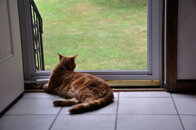 A cat lying on the floor enjoying the view from a patio door