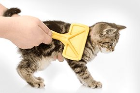 A kitten being groomed with a yellow brush