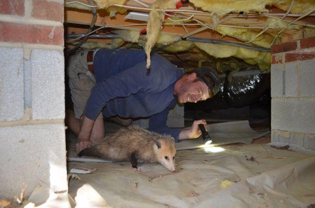 Animal Removal Raleigh, NC