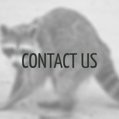 Raccoon Removal Raleigh, NC