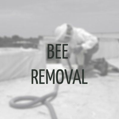 Bee Removal Raleigh, NC