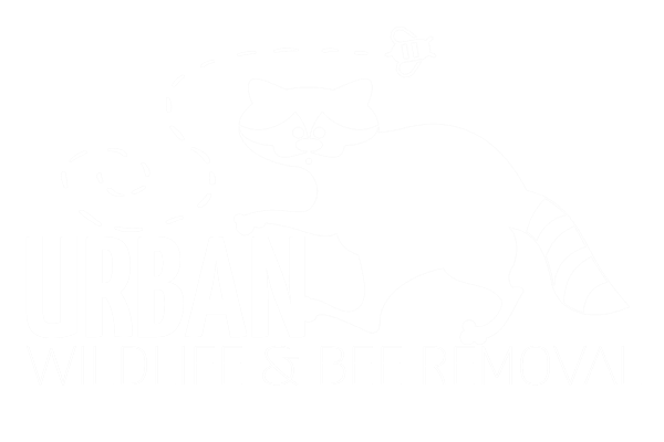 Rodent Removal Raleigh, NC