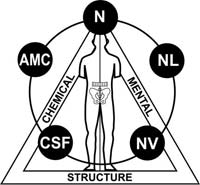 Applied Kinesiology NYC - Dr. Louis Granirer Holistic Chiropractor