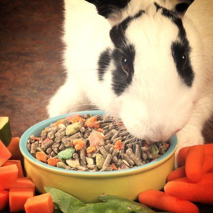 healthy rabbit food