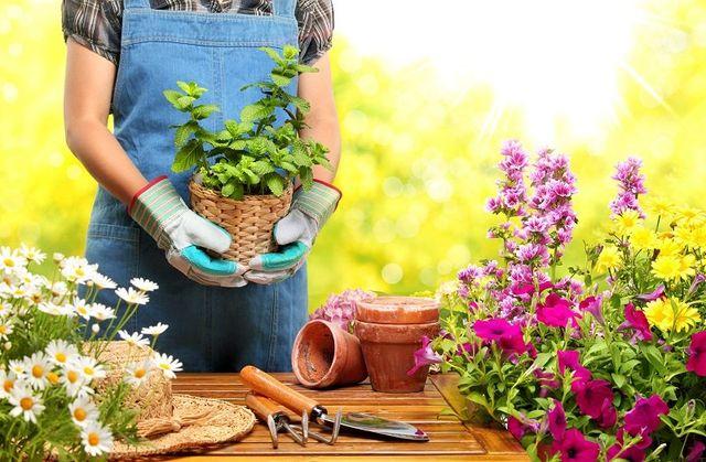 Donna con un vaso con una pianta di menta