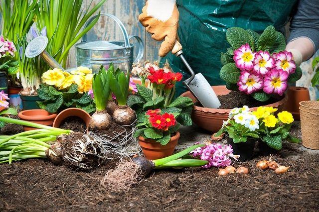 Donna piante delle piantine in un giardino