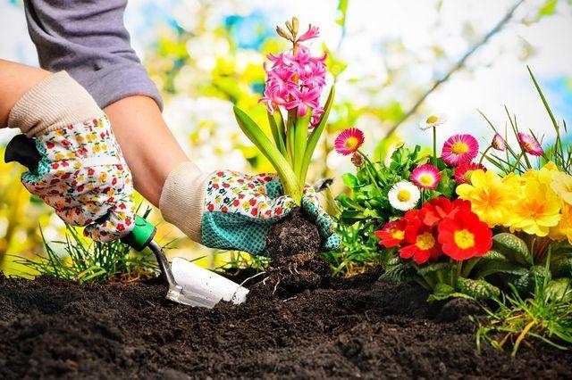 Donna pianta una pianta fiorita  in un giardino