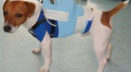 elettrocardiografia per animali, atlante di ecocardiografia veterinaria, immagini di ecocardiografia veterinaria