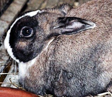 mangimi per conigli, gabbie per conigli, trasporto animali domestici