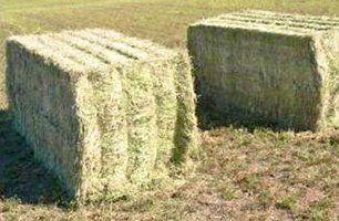 warranted hay