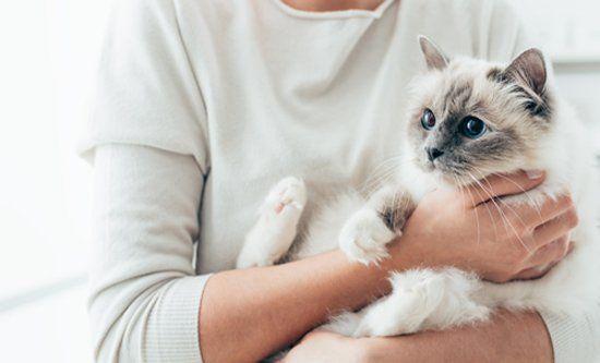 gatto in braccio a una persona