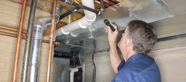 One member of our pest inspection services team in Hilo, HI