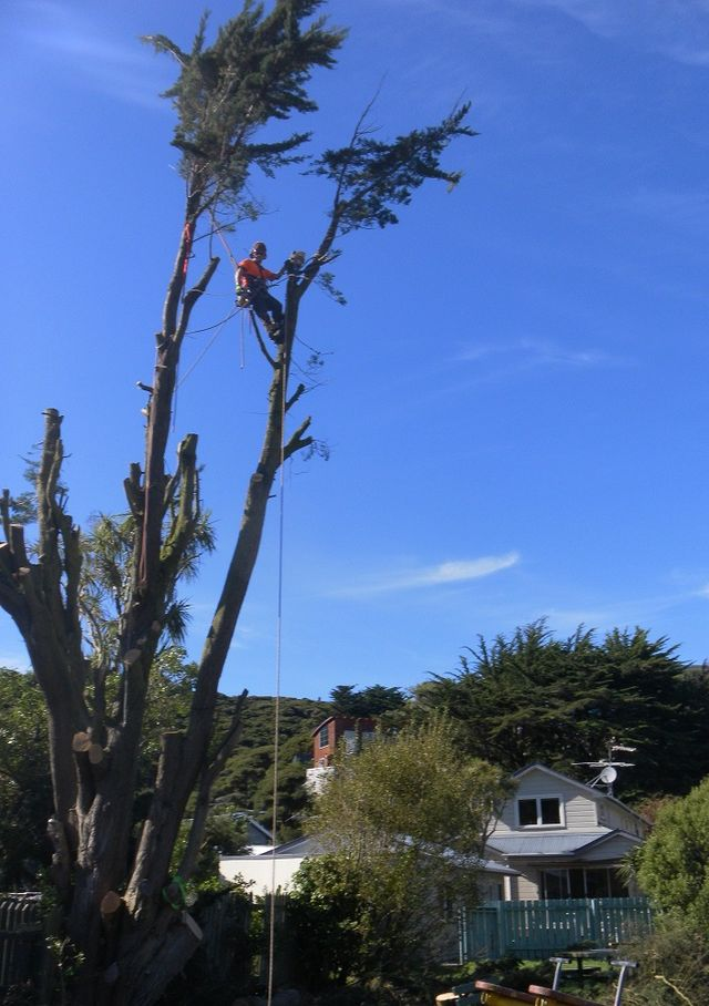 Before and after tree services in Wellington