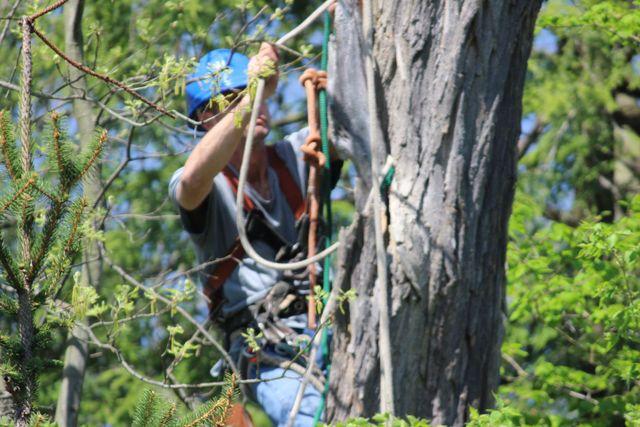 Employee working in a tree