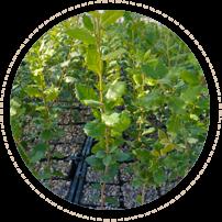 piante-micorrizate