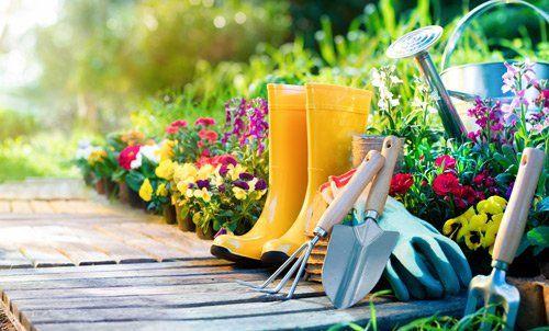 servizi di potatura piante